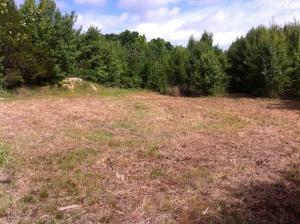 bush-hogged field